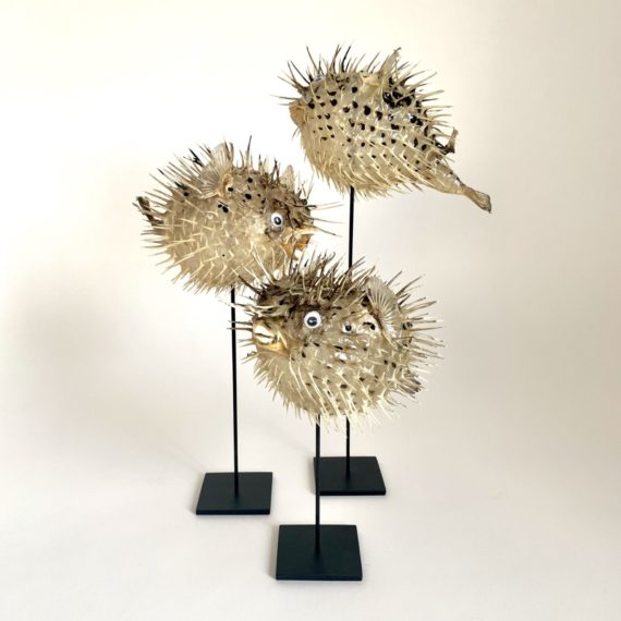 BLOWFISH-LUXURYNATURE-SETOF3